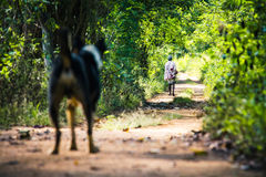 A dog looks on as a man walks away from him in a forest path clo Stock Photography
