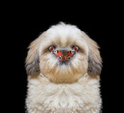 Dog looks at butterfly at his nose
