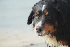 Dog looks near sea Royalty Free Stock Photos