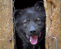 Dog looks out of the kennel Stock Photo