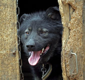 Dog looks out of the kennel Royalty Free Stock Images