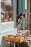 Dog looks out of shop door. LYME REGIS, UK - APRIL 11, 2016: Dog looks out of tourist shop door royalty free stock photo