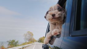 The dog looks out the window of the car that is moving
