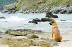 Dog looks at the sea Royalty Free Stock Photos