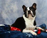 Dog looks skyward Stock Photo