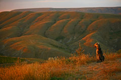 Dog looks at the sunset. Dog looks at mountains and the sunset, Crimea, Koktebel Stock Images