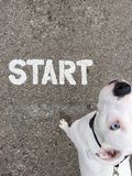Our journey starts here. Dog looks to owner to start there journey Royalty Free Stock Photo