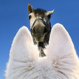 Dog looks up. Dog Zepp looks up to fis fellow horse on a late summer day with a pretty blue sky stock image