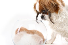 Dog looks in a vase with kittens Royalty Free Stock Photography