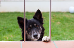 Dog looks through a window Royalty Free Stock Photography