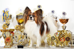 Dog with a lot of cups Royalty Free Stock Photo