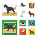 A dog in a lounger , a muzzle of a pet, a bowl with a feed, a sheepdog with a ball in his teeth. Pet ,dog care set. A dog in a lounger , a muzzle of a pet, a Royalty Free Stock Photography