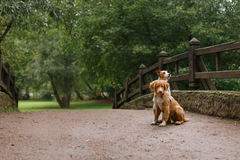 Dog  love and hug Royalty Free Stock Images