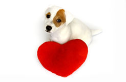 Dog in love with a red heart Royalty Free Stock Photo