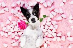 Dog love rose valentines Royalty Free Stock Photo