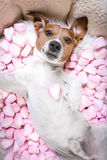 Dog love rose valentines selfie Royalty Free Stock Photos