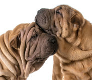 Dog love Stock Image