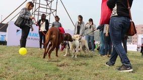 Dog lover celebrating & enjoying Pet Fed Fair. Dog lover celebrating & enjoying Pet Fed dog fair with their pet dogs held in December at Delhi pet fed 2016 stock video