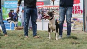 Dog lover celebrating & enjoying Pet Fed Fair. Dog lover celebrating & enjoying Pet Fed dog fair with their pet dogs held in December at Delhi pet fed 2016 stock footage