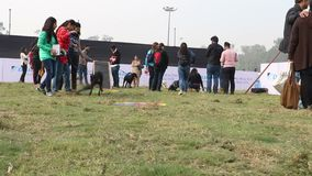 Dog lover celebrating & enjoying Pet Fed Fair. Dog lover celebrating & enjoying Pet Fed dog fair with their pet dogs held in December at Delhi pet fed 2016 stock video footage