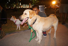 Dog lovers Royalty Free Stock Photo