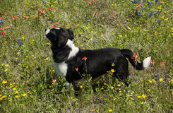 Dog loves flowers Stock Photo
