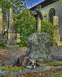 A dog with a loyalty broken heart in HDR. A faithful dog who mourn at his masters grave in HDR. The church is built completely in 1849 in the city of Fritsla in Stock Photo