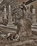A dog with a loyalty broken heart in retro style. Vintage style of a faithful dog who mourn at his masters grave. The church is built completely in 1849 in the Royalty Free Stock Photo