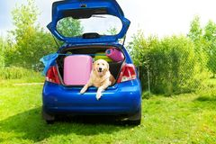 Dog and luggage in the car trunk. Dog and bags and other luggage in the trunk of the car on the back yard ready to go for vacation Royalty Free Stock Photography