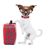 Dog with luggage. Jack russell dog ready to leave for summer vacation or holidays with fancy red luggage or suitcase, isolated on white background stock photography