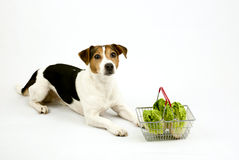 Dog lying with a basket with salad Royalty Free Stock Photography