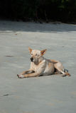 Dog lying in beach Stock Photography