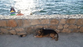 Dog lying on the beach on sunny day stock footage