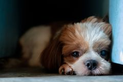 Dog is lying in the dark corner. Pretty dog is lying in the dark corner and look forward Stock Photo