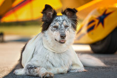 Dog lying down in front of airplane stock image