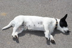 A dog. Lying down on the ground Stock Photo