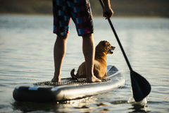 Dog lying down on paddle board with man paddling Royalty Free Stock Photos