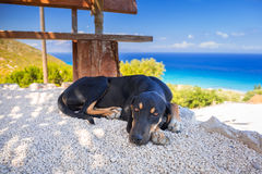 Dog lying down in the shadow on Zakynthos island Stock Images