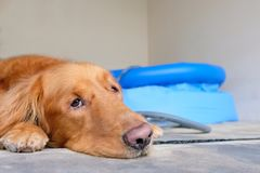 A dog lying down side of the plastic pool. royalty free stock photos