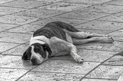 Black and white photo of a dog lying on pedestrian street. This photo was taken in Heraklion on Greece island of Crete royalty free stock photo