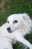 Dog. Lying on green grass royalty free stock photo