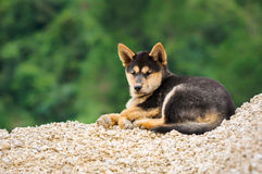 Dog lying on pile of stones and looking to camera Stock Photo