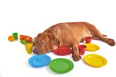 Dog lying among Plates and Cups Stock Image