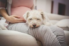 Dog owner,pregnant woman. royalty free stock photography