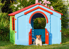 Dog lying and resting at colorful doghouse at back yard garden Royalty Free Stock Images