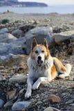 Dog is lying on the rocks. Husky is lying on the rocks Royalty Free Stock Photography