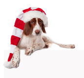 Dog lying in santa hat with white blank Stock Photo