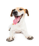 Dog lying with satisfied muzzle Royalty Free Stock Image