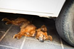 Dog Lying in the shadow of the car Royalty Free Stock Images