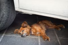 Dog Lying in the shadow of the car Stock Photo